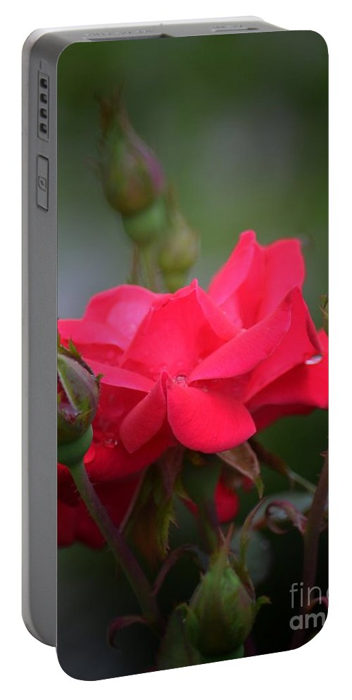 Red Rose 14-1 Portable Battery Charger featuring the photograph Red Rose 14-1 by Maria Urso