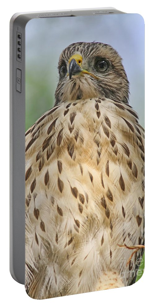 Fledgling Portable Battery Charger featuring the photograph Red Shoulder Fledgling by Deborah Benoit