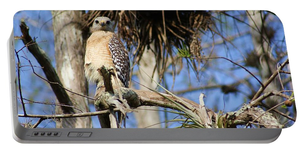 Hawk Portable Battery Charger featuring the photograph Red Shoulders by Chuck Hicks