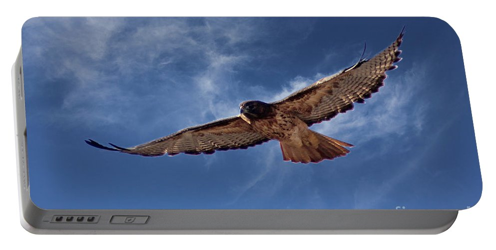 Colorado Portable Battery Charger featuring the photograph Red Tailed Hawk by Bob Hislop