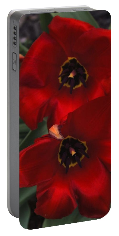 Tulip Portable Battery Charger featuring the photograph Red Tulip Pair by John Feiser