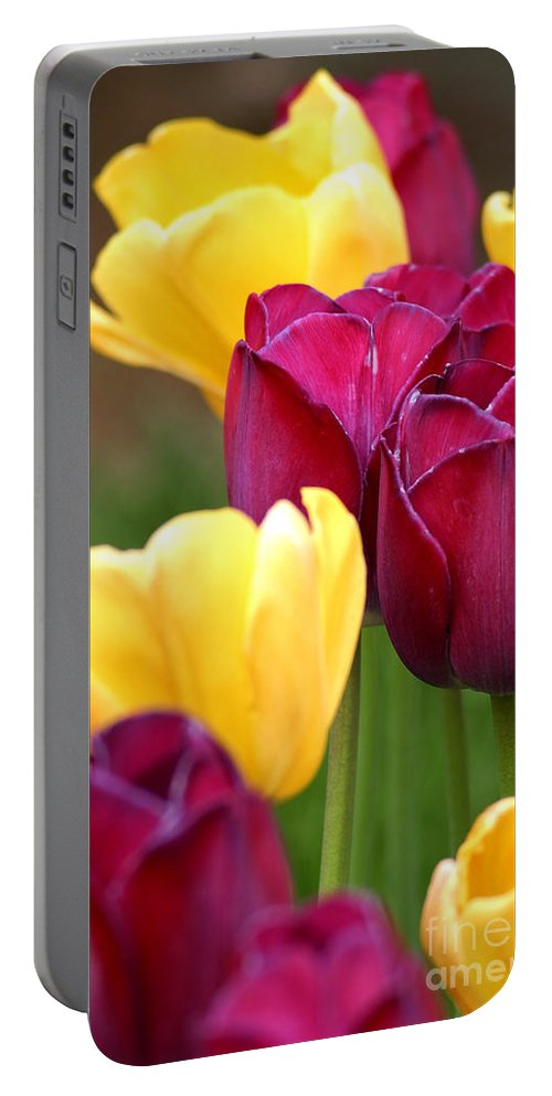 Tulip Portable Battery Charger featuring the photograph Redyellowtulips6728 by Gary Gingrich Galleries