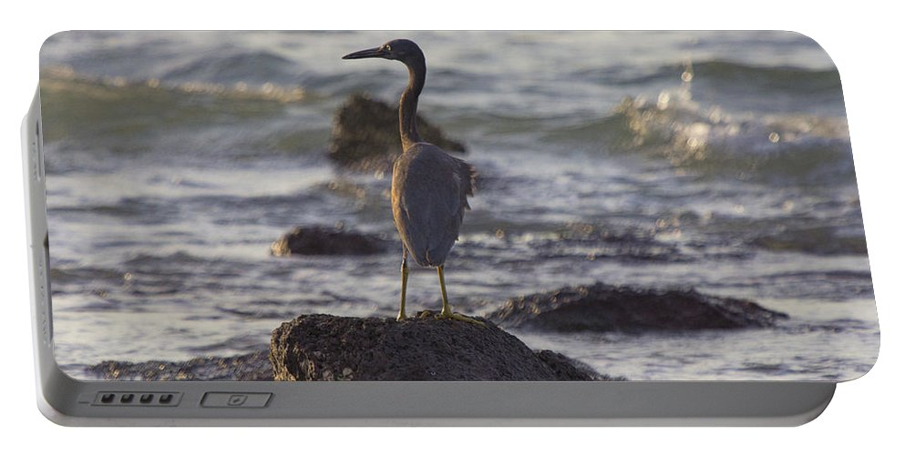 Reef Egret Portable Battery Charger featuring the photograph Reef Egret by Douglas Barnard
