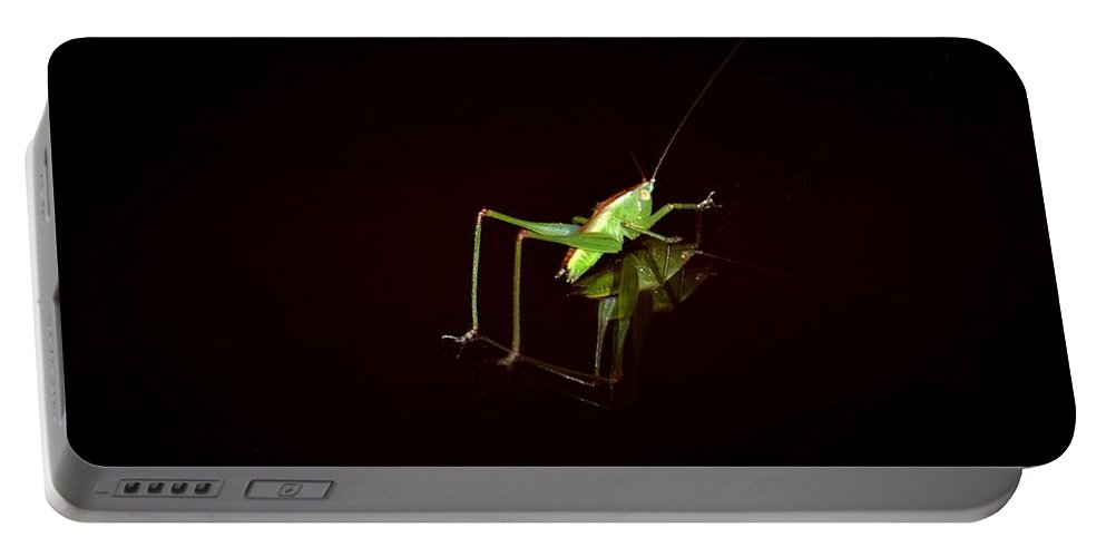 Reflection Of A Grasshopper Portable Battery Charger featuring the photograph Reflection Of A Grasshopper by Maria Urso