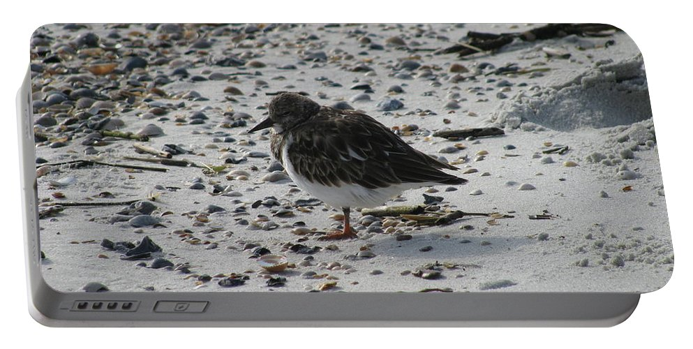 Landscape Portable Battery Charger featuring the photograph Resting Ruddy by Ellen Meakin