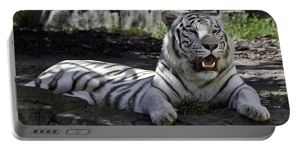 Tigers Portable Battery Charger featuring the photograph Resting Two by Ken Frischkorn