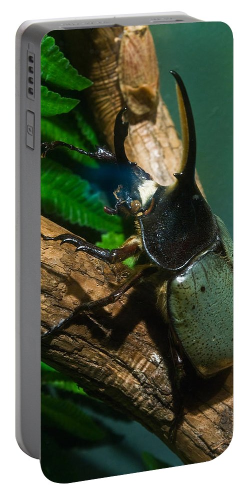 Rhinoceros Portable Battery Charger featuring the photograph Rhinoceros Beetle by Douglas Barnett