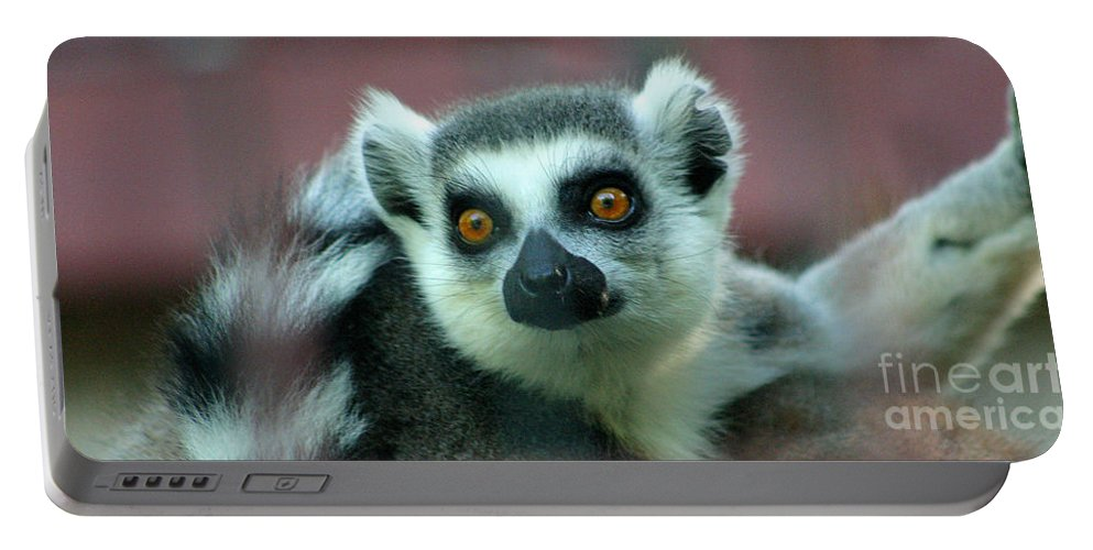Ring Tailed Lemur Portable Battery Charger featuring the photograph Ring Tailed Lemur-2 by Gary Gingrich Galleries