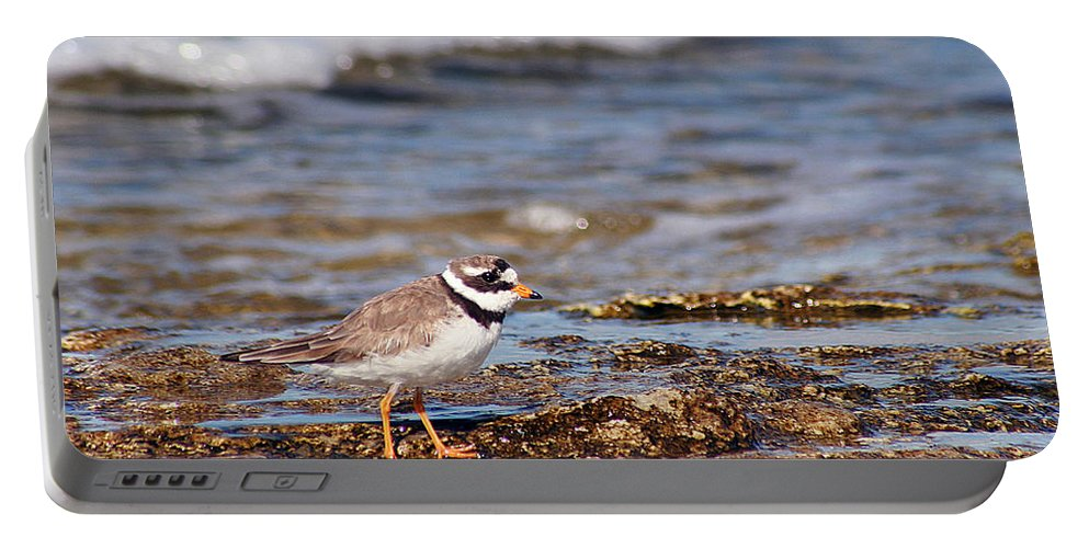 Ringed Plover Portable Battery Charger featuring the photograph Ringed Plover by Dreamland Media