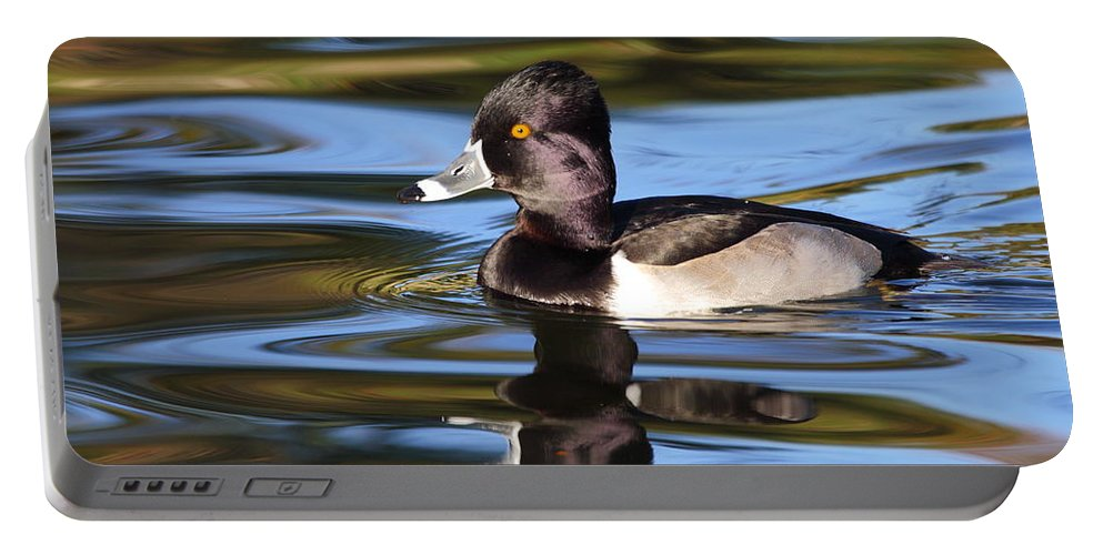 Ring-necked Duck Portable Battery Charger featuring the photograph Rings around Ring-necked Duck by Andrew McInnes