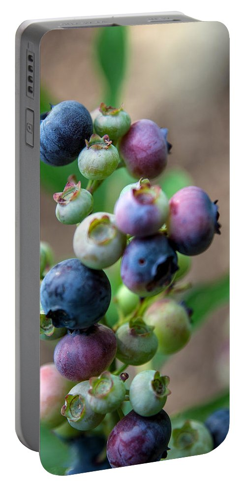 Asheville Portable Battery Charger featuring the photograph Ripening Blueberries by John Haldane