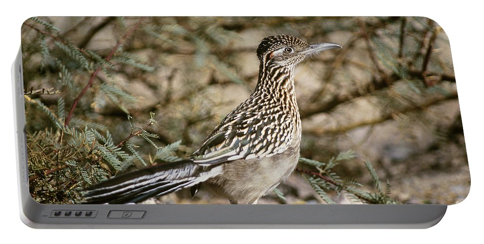 Animal Portable Battery Charger featuring the photograph Roadrunner Geococcyx Californianus by Mark Newman