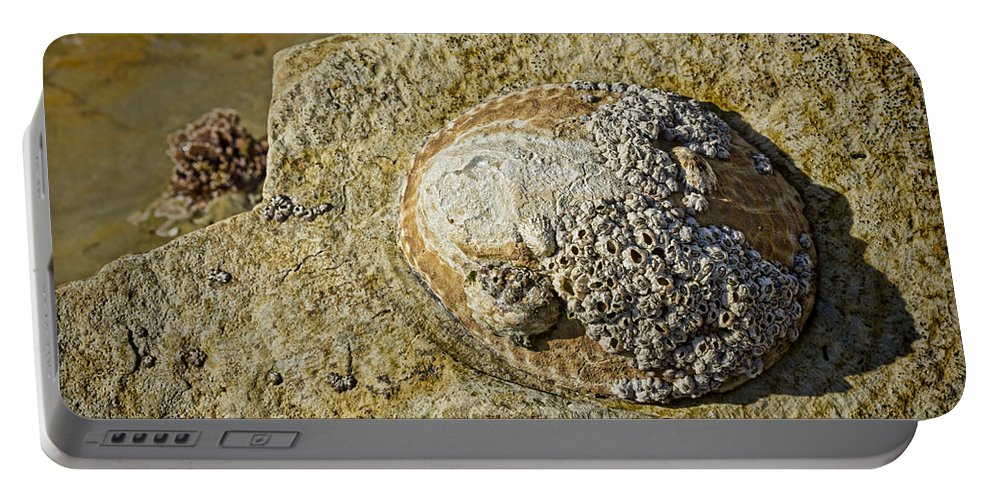 Gastropods Portable Battery Charger featuring the photograph Rocky Cliff by Kelley King