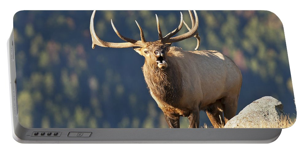 Rocky Mountain Bull Elk Bugling Portable Battery Charger featuring the photograph Rocky Mountain Bull Elk Bugling by Gary Langley