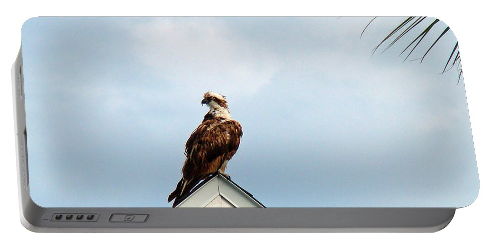 Osprey Portable Battery Charger featuring the photograph Roof Ornament by Nancy L Marshall
