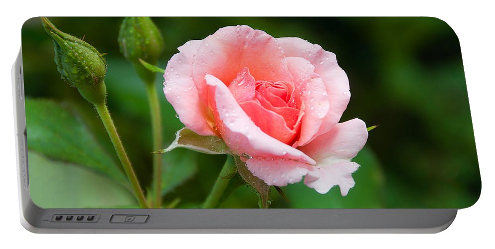 Rose Portable Battery Charger featuring the photograph Rose And Raindrops by Georgette Grossman
