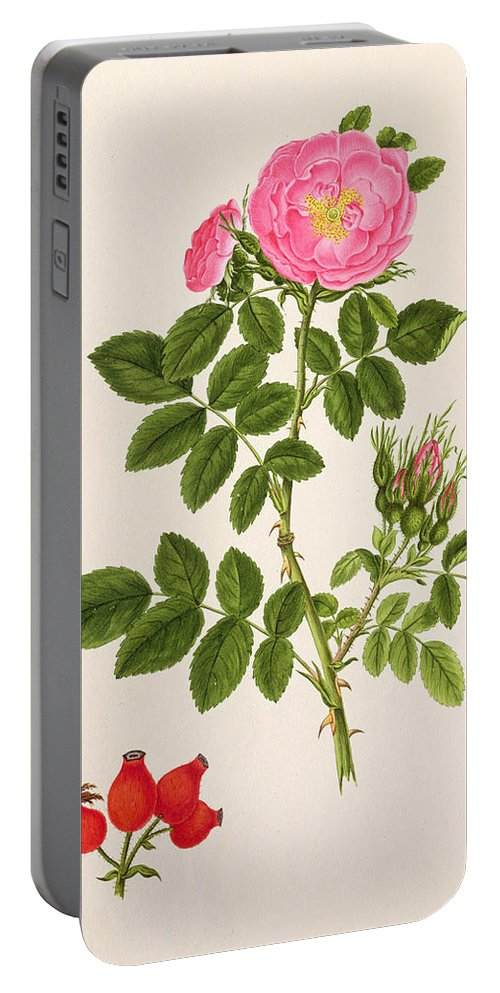 Rose Portable Battery Charger featuring the painting Rose Eglanteria by T Goetz