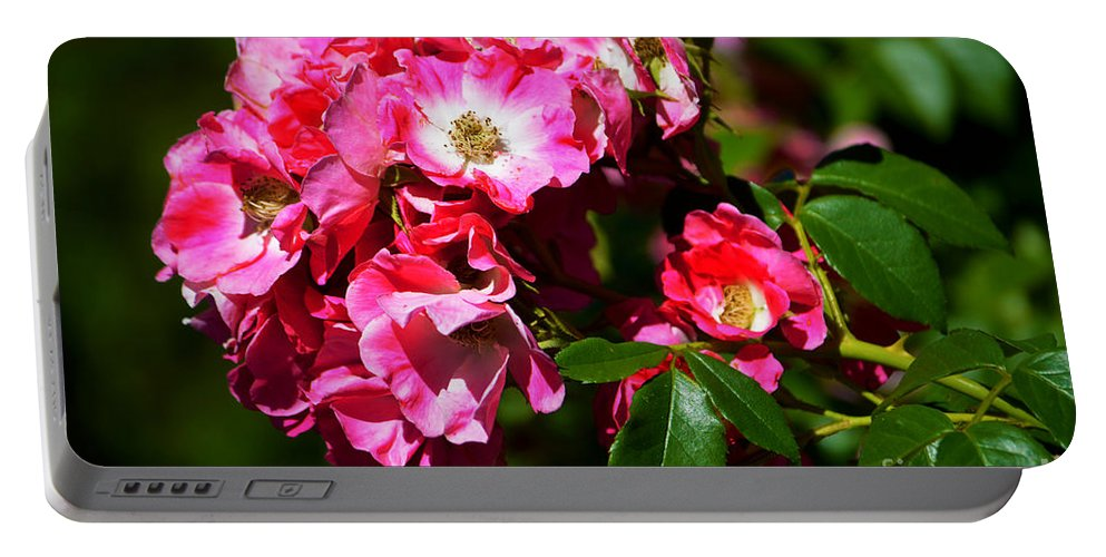 Rose Garden Portable Battery Charger featuring the photograph Rose Garden 4 by Susanne Van Hulst