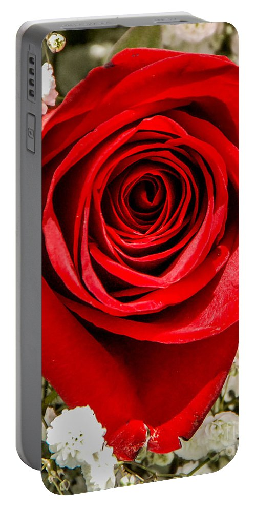 Rose Portable Battery Charger featuring the photograph Rose Macro 1 by Grace Grogan