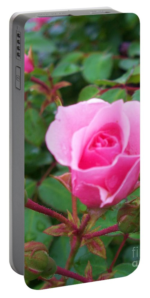 Rose Portable Battery Charger featuring the photograph Rose Ocean City Md by Eric Schiabor
