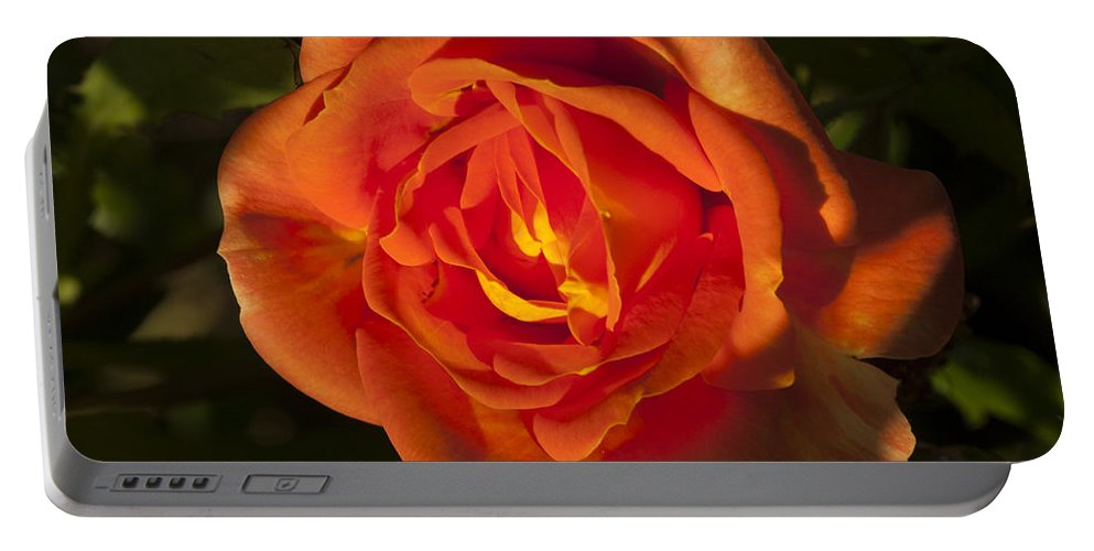 Rose Portable Battery Charger featuring the photograph Rose Orange by Richard Thomas
