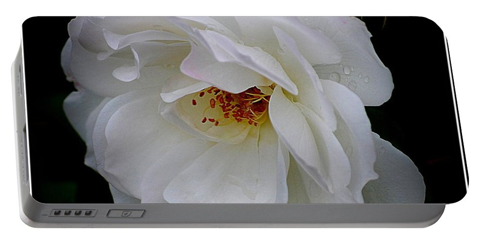 Rose Portable Battery Charger featuring the photograph Rose Perfection by Kathy Sampson