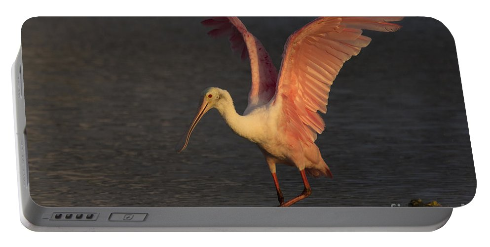 Roseate Spoonbill Portable Battery Charger featuring the photograph Roseate Spoonbill Photograph by Meg Rousher