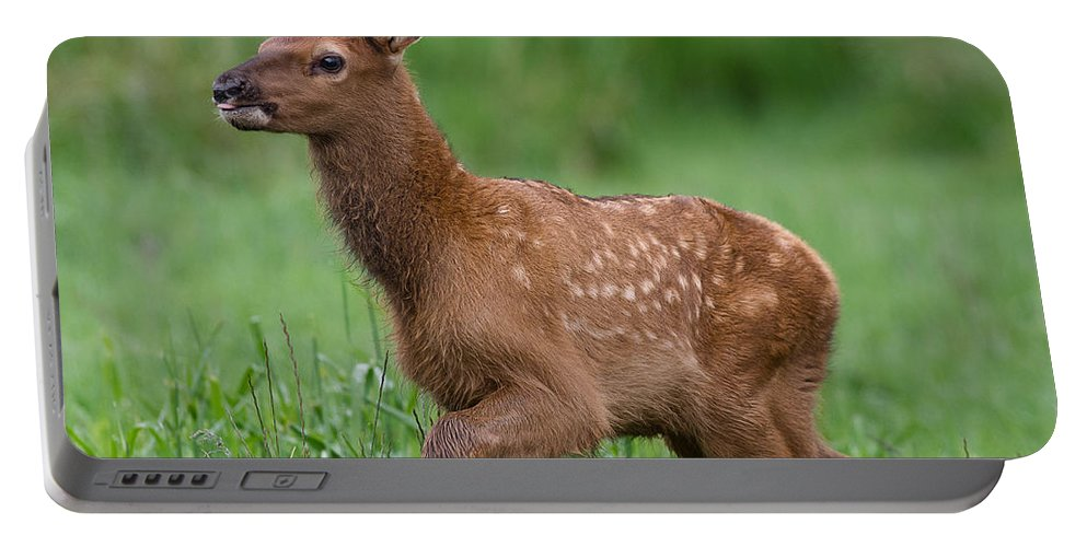 Elk Portable Battery Charger featuring the photograph Rosie Elk Youngin by Greg Nyquist