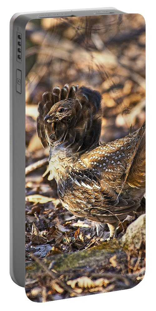 Ruffed Grouse Portable Battery Charger featuring the photograph Ruffed Grouse Ruff by Timothy Flanigan