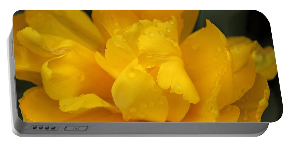 Tulip Portable Battery Charger featuring the photograph Yellow Ruffled Parrot Tulip Flower by Jennie Marie Schell