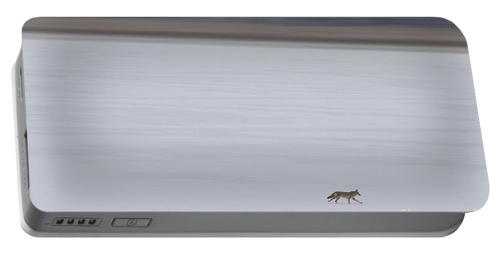 Fox Portable Battery Charger featuring the photograph Running Fox by James BO Insogna