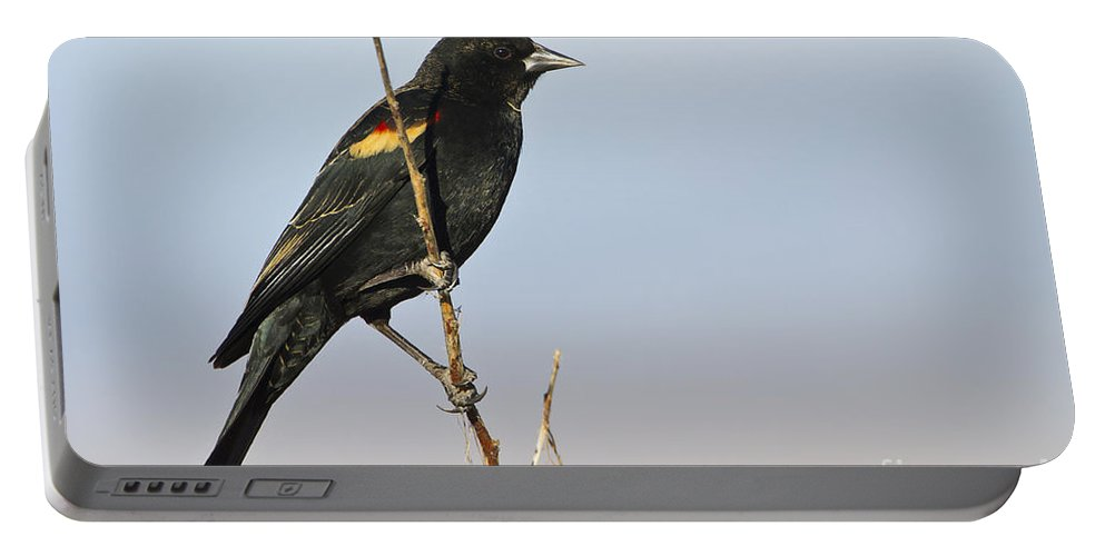 Red Wing Black Bird Portable Battery Charger featuring the photograph Rwbb On Stick by Bryan Keil