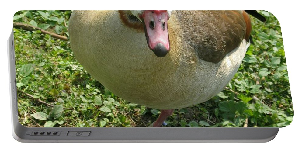 Goose Portable Battery Charger featuring the photograph Sad Goose by Christiane Schulze Art And Photography