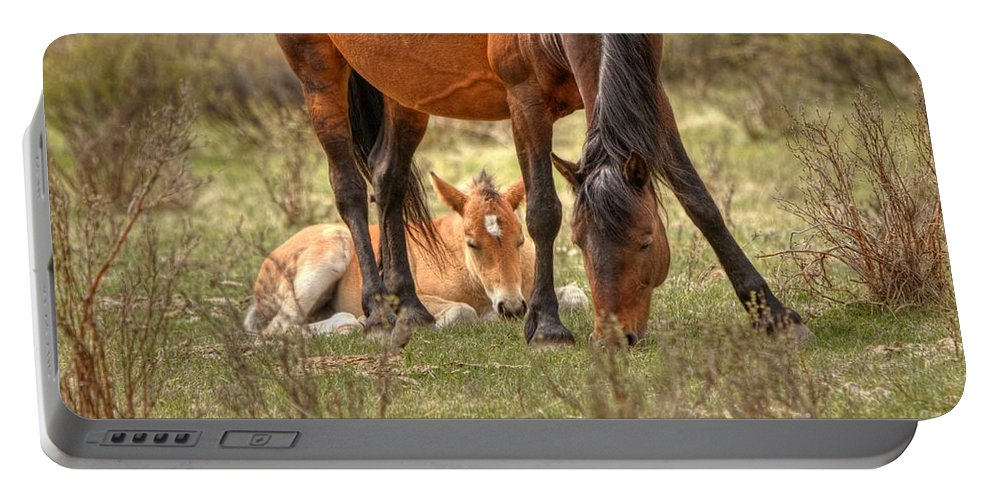 Wild Horses Portable Battery Charger featuring the photograph Safe by James Anderson