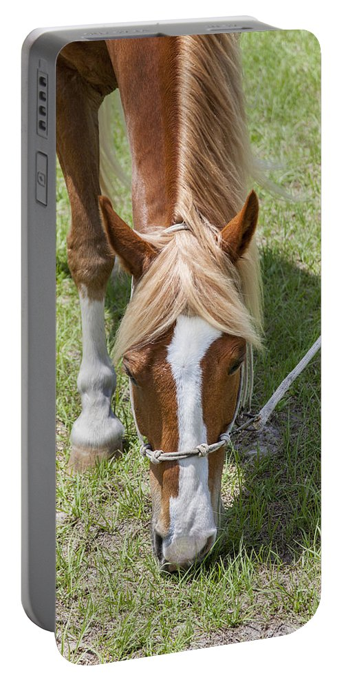 Rocking Horse Stables Portable Battery Charger featuring the photograph Salad Of Greens by Rich Franco