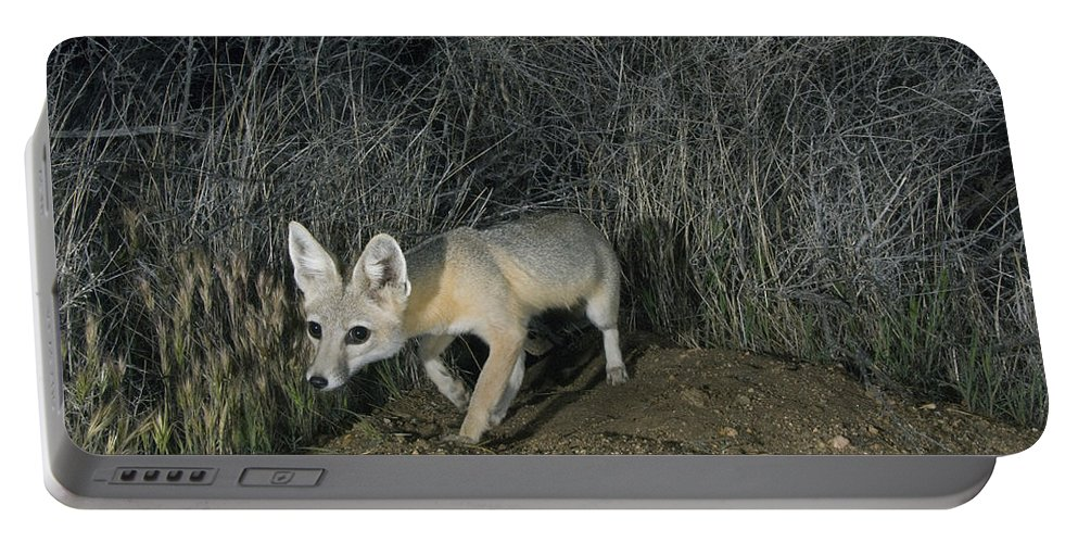 Feb0514 Portable Battery Charger featuring the photograph San Joaquin Kit Fox At Night Carrizo by Kevin Schafer