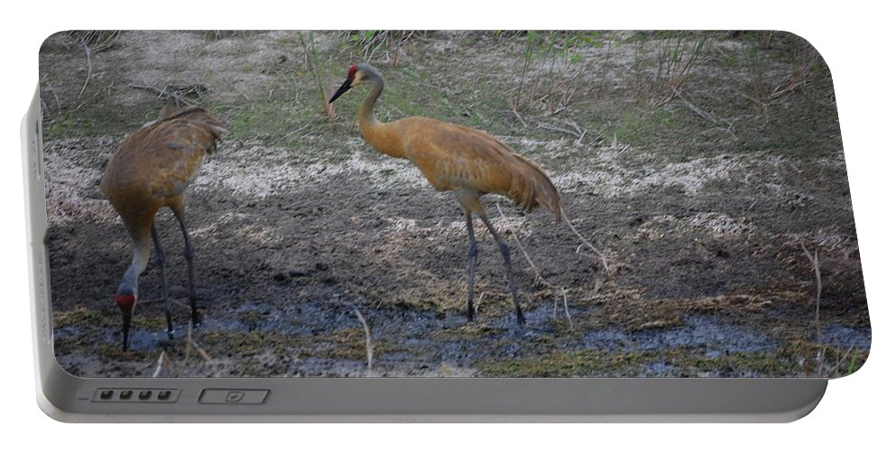 Feeding Portable Battery Charger featuring the photograph Sandhill Crane by Robert Floyd