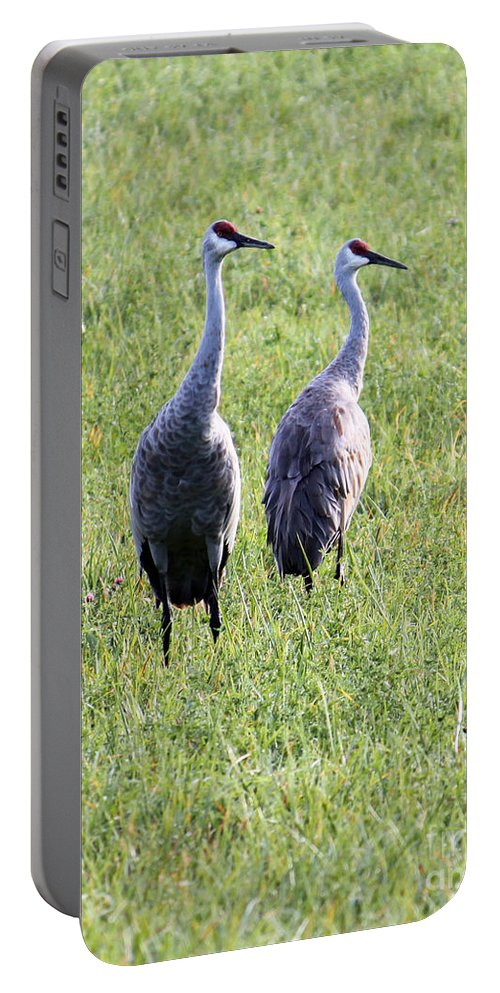 Sandhill Crane Portable Battery Charger featuring the photograph Sandhill Cranes In Wisconsin by Debbie Hart
