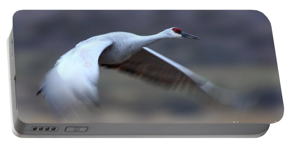 Sandhill Crane Portable Battery Charger featuring the photograph Sandhill Speeding By by Bryan Keil