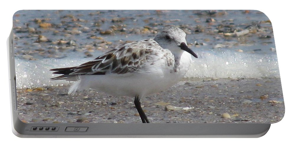 Landscape Portable Battery Charger featuring the photograph Sandpiper And Shells by Ellen Meakin