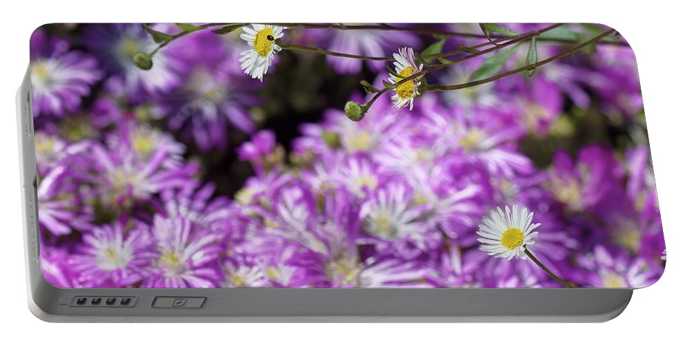 Barbara Portable Battery Charger featuring the photograph Santa Barbara Daisies In Ice Plant by SC Heffner