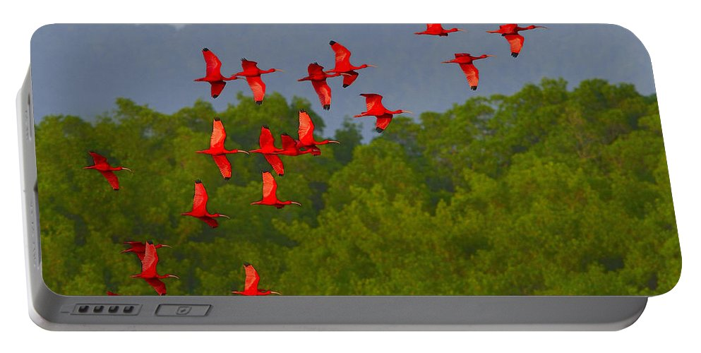 Scarlet Ibis Portable Battery Charger featuring the photograph Scarlet Ibis by Tony Beck