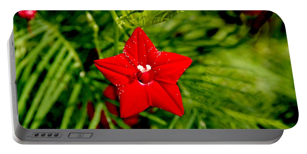 Scarlet Morning Glory Portable Battery Charger featuring the photograph Scarlet Morning Glory - Horizontal by Ramabhadran Thirupattur