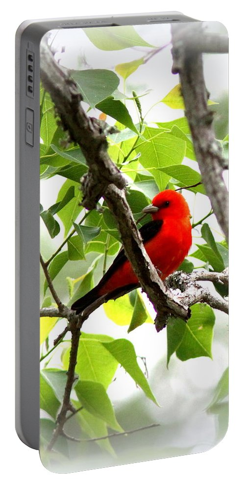 Scarlet Tanager Portable Battery Charger featuring the photograph Scarlet Tanager - 19 by Travis Truelove