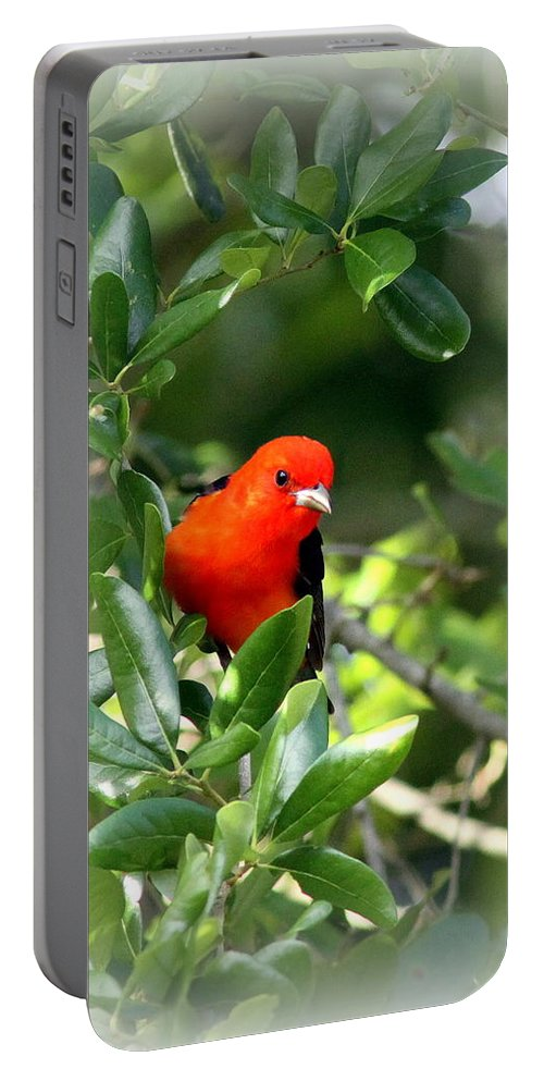Scarlet Tanager Portable Battery Charger featuring the photograph Scarlet Tanager by Travis Truelove