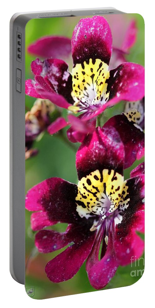 Mccombie Portable Battery Charger featuring the photograph Schizanthus From The Hit Parade Mix by J McCombie