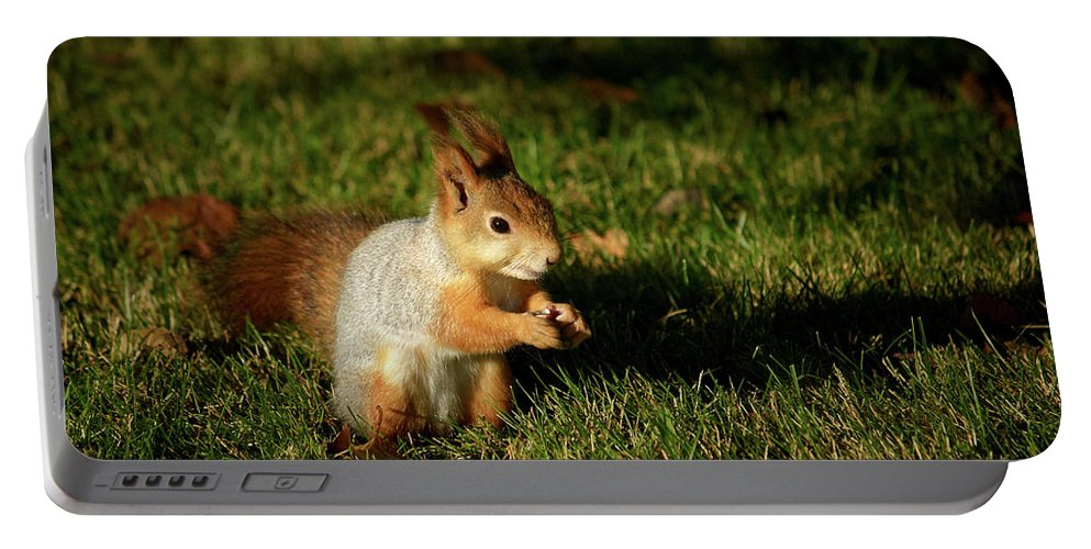 Lehtokukka Portable Battery Charger featuring the photograph Sciurus Vulgaris In Evening Light by Jouko Lehto
