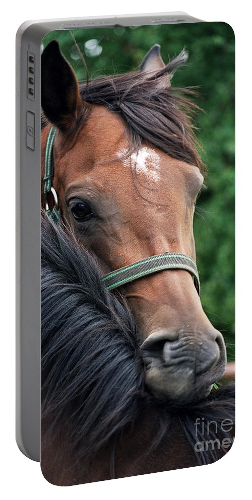 Horse Portrait Portable Battery Charger featuring the photograph Scratch My Back by Angel Ciesniarska