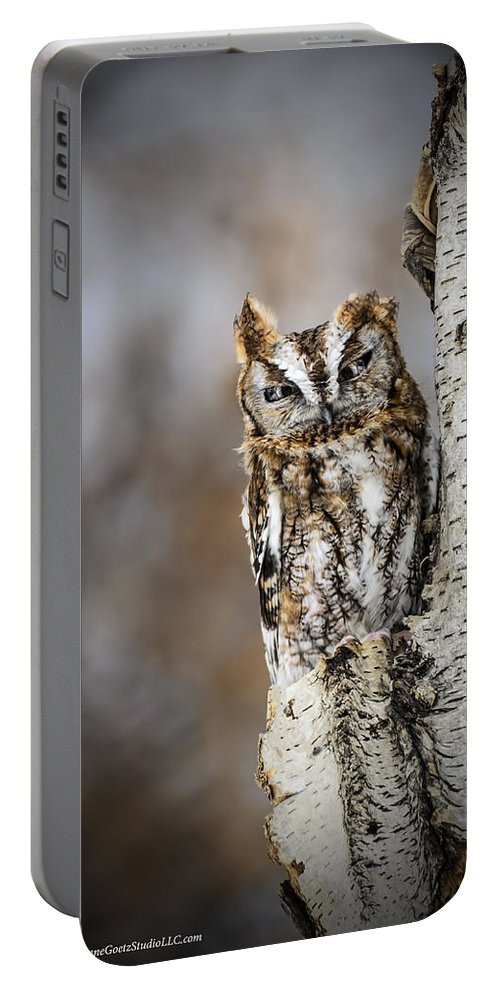 Screech Owls Portable Battery Charger featuring the photograph Screech Owl Checking You Out by LeeAnn McLaneGoetz McLaneGoetzStudioLLCcom