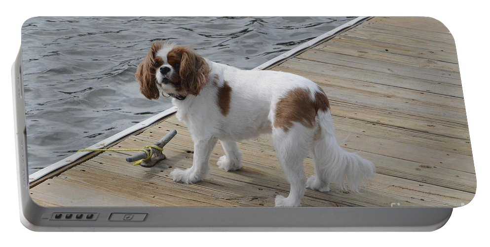 King Charles Cavalier Spaniel Portable Battery Charger featuring the photograph Old Sea Dog by Dale Powell